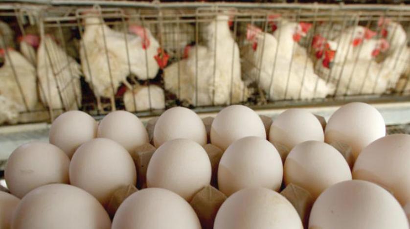 «بيض نباتي» بأسعار باهظة يقتحم الأسواق والمواطن يقف مستغرباً!