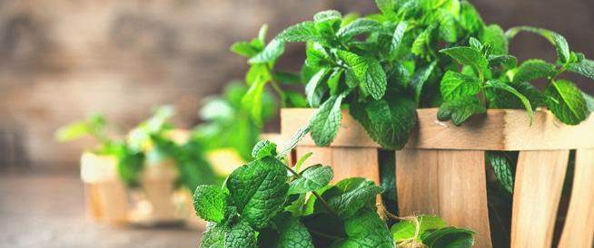 هذه الأوراق الخضراء تساعد في إنقاص وزنك