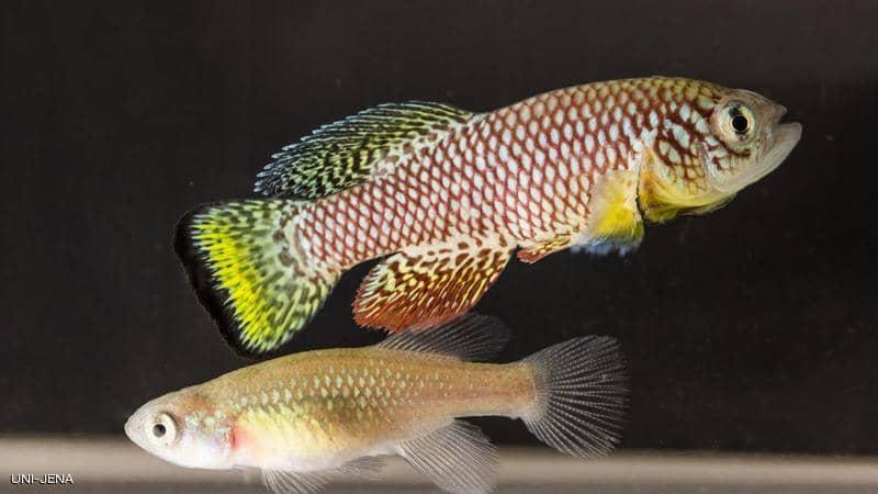 """مفتاح علاج الشيخوخة في """"جنين سمكة إفريقية"""""""