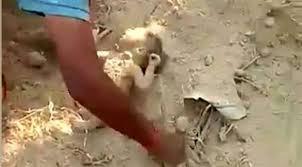 طفل ينجو بأعجوبة بعد دفنه حياً في الوحل