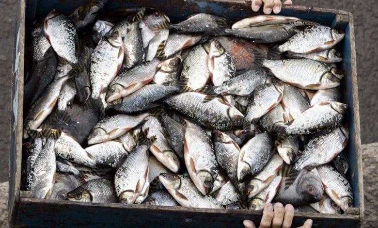 كورونا خفّض الصيد ورفع أسعار الأسماك