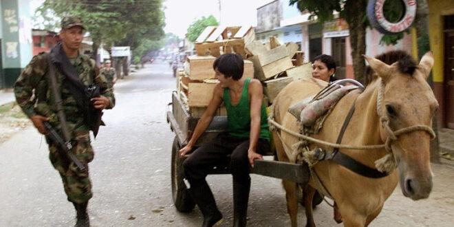 فضيحة في كولومبيا.. إطعام تلاميذ المدارس وجبات من لحوم الخيول والحمير