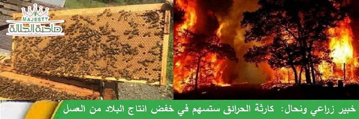 ضحايا الحرائق في الساحل لم تقتصر على الحجر والشجر