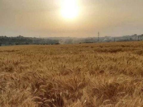 في الحديقة أو البستان.. وزير الزراعة يدعو إلى زراعة كل متر في البلاد